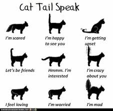 Cat Body Language Chart Image Result For Cat Body Language Chart Cats Cat Facts