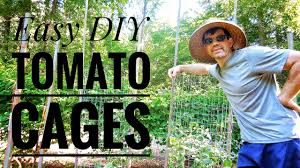 Diy tomato cage Vegetable Garden knowyourfarmer knowyourfood Youtube Growing Tomatoes In Diy Tomato Cages Easy Youtube