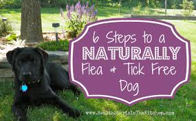 6 steps to a naturally flea and tick free dog