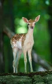 Baby Cute Deer - 1000x1600 Wallpaper ...