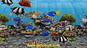 3D Fish School Aquarium Screensaver ...