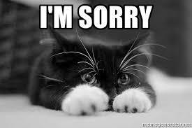 Image result for sorry cat meme