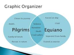 comparison contrast essay ppt  pilgrims equiano graphic organizer forced on ship choice to journey