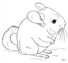Small Picture Cute long tailed chinchilla coloring page Free Printable