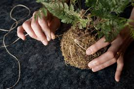 Create Your Own Kokedama Mossball - Airbnb