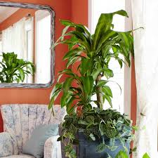 Contemporary Houseplants ...