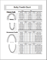Babies First Teeth Chart Baby Teeth Chart Editable Printable Ms Excel Template