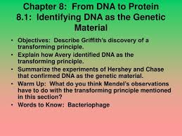 Proteins hold open the two strands 3. Ppt Chapter 8 From Dna To Protein 8 1 Identifying Dna As The Genetic Material Powerpoint Presentation Id 5412336