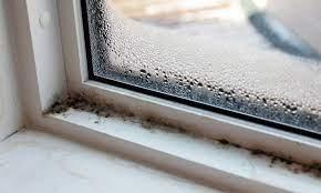 black mold on window sills causes