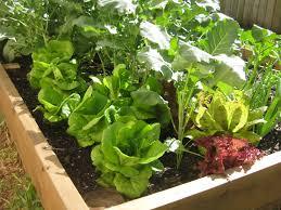 backyard gardening. These Backyard Gardening O