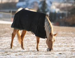 How To Weigh Your Horse Blanket Options Horse Journals