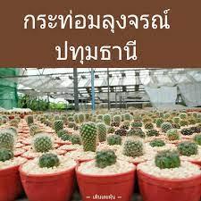 ตามล่า!!ต้นไม้เมืองร้อนแคคตัส(กระบองเพชร) กระท่อมลุงจรณ์ สามโคก ปทุมธานี -  Pantip