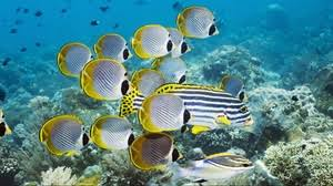 underwater ocean wallpapers.  Wallpapers Preview Wallpaper Underwater Swim Ocean Coral Fish In Underwater Ocean Wallpapers E