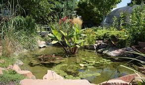 nursery pond