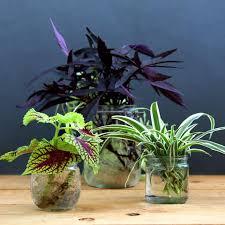 grow indoor plants in glass bottles apieceofrainbow 19