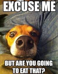 Funny Dog Quotes Magnificent The 48 Best Things About Having A Dog Dog Pictures Pinterest