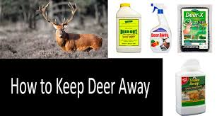 how to keep deer out of garden 9 best ways