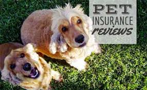 Thanks for your review, sheila! Bivvy Pet Insurance Review Low Prices But Does It Offer Enough Coverage Caninejournal Com