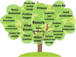 value of trees various benefits and value of the trees short  value of trees