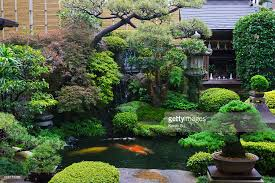Traditional Japanese garden and koi fish pond, Miyajima, Japan : Stock Photo