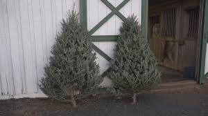 Local vineyard\u0027s Christmas tree sale raises money for charity