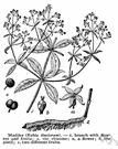 Theligonaceae - definition of Theligonaceae by The Free Dictionary