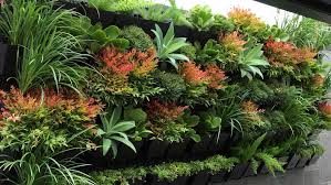 Small Picture Homelife 10 best plants for vertical gardens