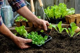 Small Picture Garden Ideas Your Guide To Starting A Vegetable Garden