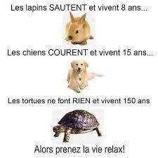 """Résultat de recherche d'images pour """"citation tortue"""""""