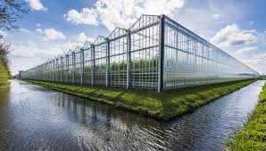 commercial greenhouse using polycarbonate plastic windows
