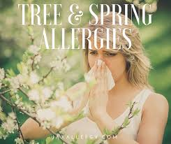 Tree Pollen & Spring Allergies in Florida: Everything You Need to Know