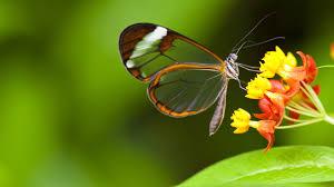 Wallpaper Butterfly, 5k, 4k wallpaper ...