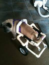 picture of dog wheelchair