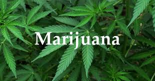 Image result for marijuana