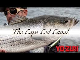 Videos Matching Striper Fishing Cape Cod Canal 2019 Revolvy