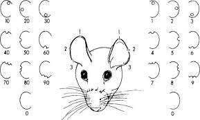Pig Ear Notch Chart Experimental Modeling And Research Methodology Sciencedirect