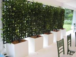 Privacy with plants-6