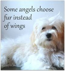 Pet Quotes Impressive Pet Loss Quotes Sympathy Card Messages