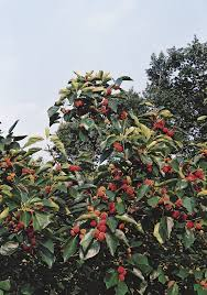 20 Best Trees Images On Pinterest  Garden Ideas Dwarf Fruit Dwarf Fruit Trees Virginia