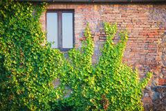 Cheap Wall Climbing Plants  Free Shipping Wall Climbing Plants Wall Climbing Plants