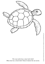 colouring in drawing green sea turtle art therapy colouring in book orders