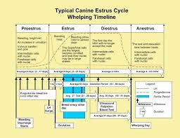 Female Dog Heat Cycle Chart Whelping Timeline Ezwhelp