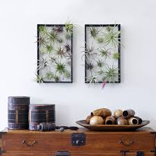 Air Plant Display 12 Diys To Get Air Plants On Your Wall