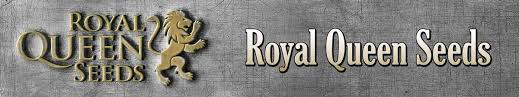 Kết quả hình ảnh cho Royal Queen Seeds
