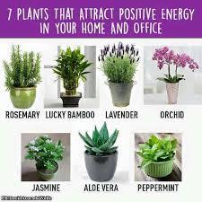 positive energy plants plants inside