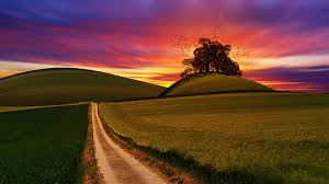 grass field sunrise. Wonderful Field Road Path In Between Grass Field During Sunset To Grass Field Sunrise