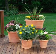 35 patio potted plant and flower ideas