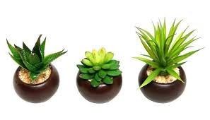 Great office plants Low Maintenance Houseplants That Can Survive Even The Darkest Corner Indoor Office Great Plants Desk Beertjepaddingtoninfo Image Of The Ultimate Guide To Office Plants Great Desk Small