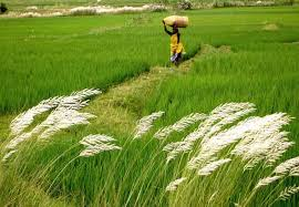 list of agricultural revolutions of brief definition gkready