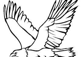 Vector Coloring Page Of A Coloring Page Outline Of A Bald Eagle Hawk